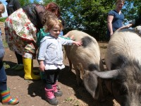 Meeting the pigs on out trip to Woodland Adventure